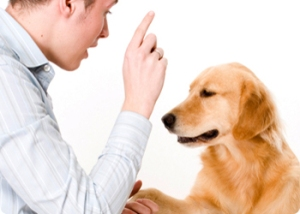 TeachingYourDogNewTricks